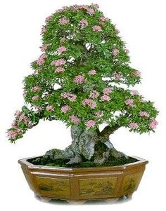 How Herb Back Garden Kits Can Get Your New Passion Started Off Instantly Bonsai Bonsai Art, Bonsai Plants, Bonsai Garden, Bonsai Trees, Dwarf Trees, Plantas Bonsai, Miniature Plants, Growing Tree, Small Trees
