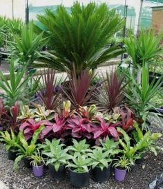 Florida Landscaping, Tropical Landscaping, Landscaping Plants, Outdoor Landscaping, Front Yard Landscaping, Outdoor Gardens, Landscaping Ideas, Landscaping Software, Backyard Ideas