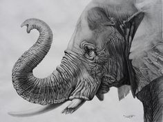 Choose your favorite graphite drawings from millions of available designs. All graphite drawings ship within 48 hours and include a money-back guarantee. Elephant Tattoo Design, Elephant Tattoos, Elephant Love, Elephant Art, Animal Drawings, Pencil Drawings, Elephant Drawings, Pencil Art, Canvas Art