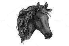 Sketch of arabian black horse. $6.00