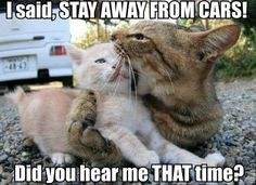 oops, ticked off mom! http://sulia.com/channel/cats/f/a6e59659-0b3c-4acc-9f9a-94865b56531d/?pinner=121941703&