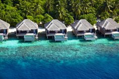 The Dusit Thani Maldives, this stunning hotel is encircled by white sandy beaches, a rich house reef and turquoise lagoon. Is located on Mudhdhoo Island, in the Maldives.The resort provides its guest a taste of paradise and a fine selection of restaurant… Maldives Accommodation, Maldives Luxury Resorts, Maldives Honeymoon, Maldives Resort, Maldives Travel, Honeymoon Destinations, Holiday Destinations, Hotels And Resorts, Luxury Hotels