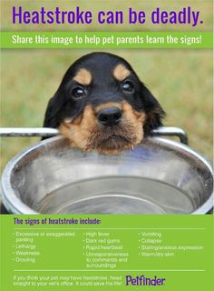 Signs of heatstroke. Summer Safety, Matou, Photo Today, Pet Safe, Pet Health, Health Tips, Health Care, Dog Care, Horse Care