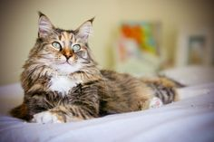 Pet Photography Tips!