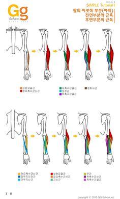팔 근육 해부학과 이해 : 네이버 블로그