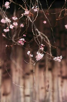 Spring by Makoto Isa (Brown + Pink Color Rosa, Pink Color, Dusty Rose, Dusty Pink, Pink Brown, Pink Grey, Scenery Photography, World Of Color, Beautiful Gardens
