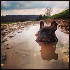 Kisha ❤ French Bulldog