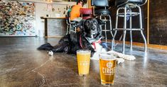54 Dog Friendly Bars And Restaurants In Austin Texas Dog Friends
