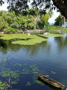 Lotus flowers in Lake Nicaragua near the city of Granada, the lake has over 247 inhabitable private islands, some with 4 star boutique hotels