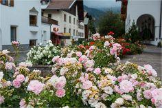 Flowers in Serfaus – near Hotel Cervosa - my way visiting Almhütte Cervosa Alm - at Serfaus-Fiss-Ladis Region in Austria / Österreich - Tyrol / Tirol