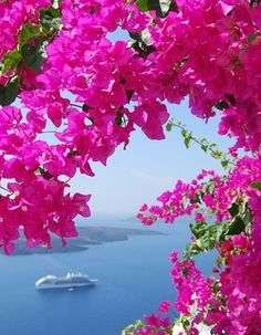 Greek Isles where the Bougainvillea grows wild.  Go to www.YourTravelVideos.com or just click on photo for home videos and much more on sites like this.