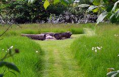 Højt græs med små stier