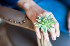 Real live plant ring