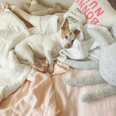 Soninho  @taylorsterling American Dog, Pet Treats, Dog Breeds, Sleep, Horse Breeds