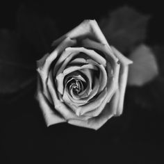 Rose by Vanessa  Arellano on 500px