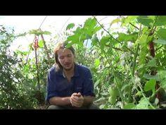 (1/3) La culture sur buttes (le jardin naturel) - YouTube