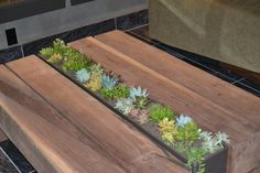 This succulent coffee table is a conversation-starter in the lobby of The Epiphany Hotel.  #travel #paloalto #california