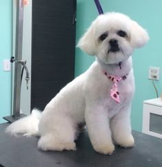 Nova, after her makeover at  The UpScale Tail, Pet Grooming Salon www.theupscaletail.us
