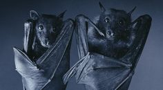 What's so bad about bats?: bats