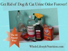 Get Rid of Dog and Cat Urine Odor The All Natural Way | WholeLifestyleNutrition.com #CatSprayingOdorRemoval