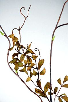 "7.00 SALE PRICE! Curly Willow Branch 50"" Olive Green Artificial. Silk eaves are 1-1/4 long x 1/2"" wide. The stem is wired.. Also see: Birch and wil..."