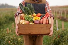 Gemüse ist abends die Rettung vor Kohlenhydraten!