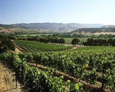 Work on your tan. Santa Barbara Wine County
