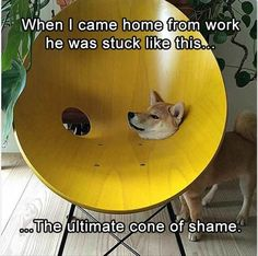 Funny Animal Pictures Of The Day – 21 Pics Funny Animal Memes, Dog Memes, Animal Quotes, Funny Animal Pictures, Cute Funny Animals, Funny Cute, Funny Dogs, Funny Memes, Hilarious