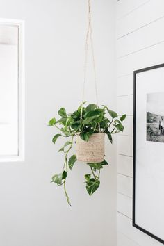 guath 3 Hard-to-Kill Houseplants — Mountainside Home Tre Hanging Plants, Indoor Plants, Indoor Herbs, Hanging Gardens, Air Plants, Cactus Plants, Plante Pothos, Pothos Plant, Plant Aesthetic