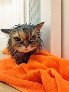 I told you: I am self cleaning!
