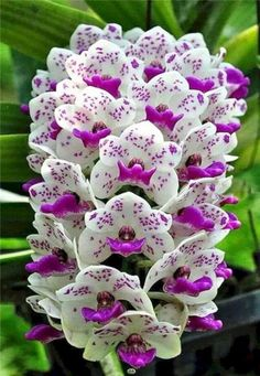 Beautiful and Unique Flower You Should Have In Your Garden 210