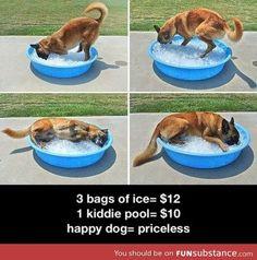 Happy dog. Dog Pool for Summer!