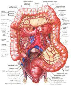 Diagram of the human body internal organs nursing pinterest as many people know there are two kinds of intestine contained inside humans ccuart Gallery