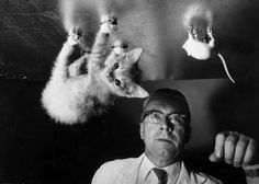 See 25 of the most meow-worthy cats in LIFE Magazine's archive of iconic photography–with appearances by Fred Astaire and Ernest Hemingway. Gjon Mili, Gordon Parks, Chelsea Clinton, Fred Astaire, Ernest Hemingway, Life Magazine, Experiment, Science Cat, Funny Science