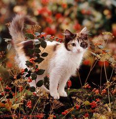 Cat Amongst Autumn Berries by Warren Photographic