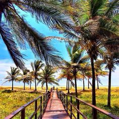 In a world where you can be anything... be yourself ✨✨ Aracaju, Brazil, picture by ✨✨@cbezerraphotos✨✨ #Padgram