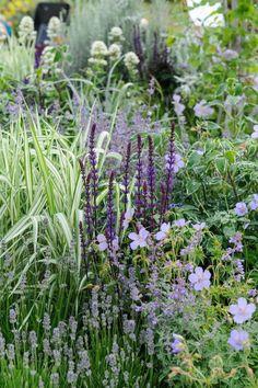 Geranium vivace, Salvia, Lavande, Valeriane, Nepeta et Phalaris.