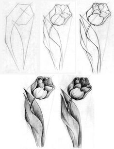 How to football - Zeichnen - Art Sketches Sketchbook Drawings, Pencil Art Drawings, Animal Drawings, Easy Drawings, Drawing Sketches, Cat Drawing, Sketching, Flower Drawing Tutorials, Flower Sketches