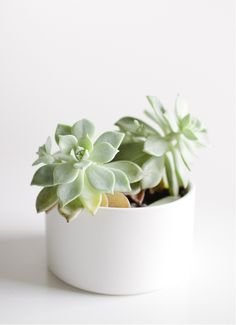 ChicDecó: | Decorating with succulents