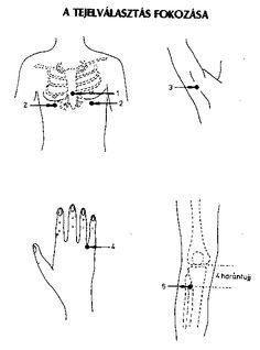 Akupunktura Acupressure, Ayurveda, Math, Feng Shui, Yoga, Health, Math Resources, Mathematics