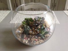 petits cactus dans un aquarium , sable ramené de Capbreton, en même temps le souvenir des vacances est toujours sous nos yeux . Arroser très rarement et placer au jour si possible .