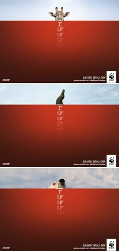 WWF Ads