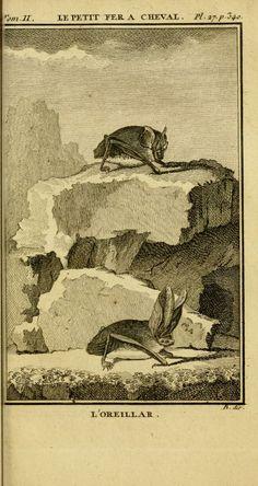2 - uvres complètes de M. le C[om]te de Buffon ... : - Biodiversity Heritage Library