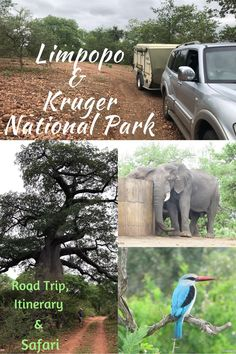 Limpopo road trip route plus itinerary and Kruger National Park safari — Roaming Fox Kruger National Park Safari, National Parks, River Camp, Road Trip Hacks, Road Trips, Africa Travel, Travel Inspiration, Travel Ideas, Adventure Travel