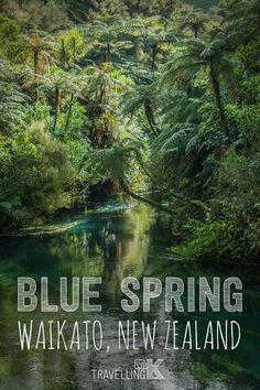 Blue Spring - Waikato, New Zealand