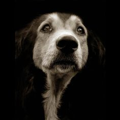 Shelter Dogs by Traer Scott  This collection of beautiful, soulful photos is nothing, NOTHING short of heart wrenching. Amazing work.