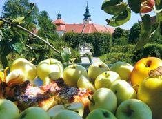 """Rezepte zu einigen Herbstgerichten aus der Klosterküche. Wir wünschen, wie die Benediktiner """"Wohl zu speisen""""!    #rezpete #klosterküche #herbstküche #rezeptefürden herbst #kochn #gesegnetemahlzeit Apple, Fruit, Food, Clear Vegetable Soup, Pope Francis, Easy Meals, Recipies, Apple Fruit, Essen"""