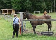 Tips for Horses Who Live Outside    The care of horses involves many tasks. This article looks at some of the basic necessities and tasks you need to know when you are learning about how to take care of horses correctly. You may be required to undertake these as a horse owner and/or carer when you are caring for horses who live in a paddock/ field/ pasture (depending on the country where you live).