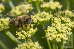 Week52-47 Flora, Bee, Landscape, Nature, Animals, Naturaleza, Animales, Animaux, Plants