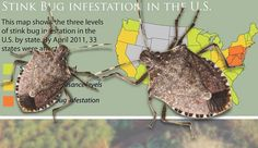 Plow & Hearth Neighborhood - Guides - Stink Bugs 101 - History, Prevention And Elimination. This is for you Kelly!